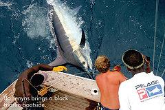 Black Marlin Boatside