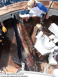 Blue Marlin abourd the Hooker