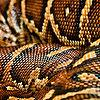 Flickr-corinne-schwarz-snake